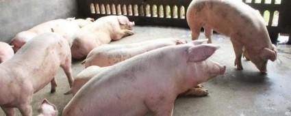 养猪场废水处理工程技术方案 养猪场的污水咋处理后才能排放?