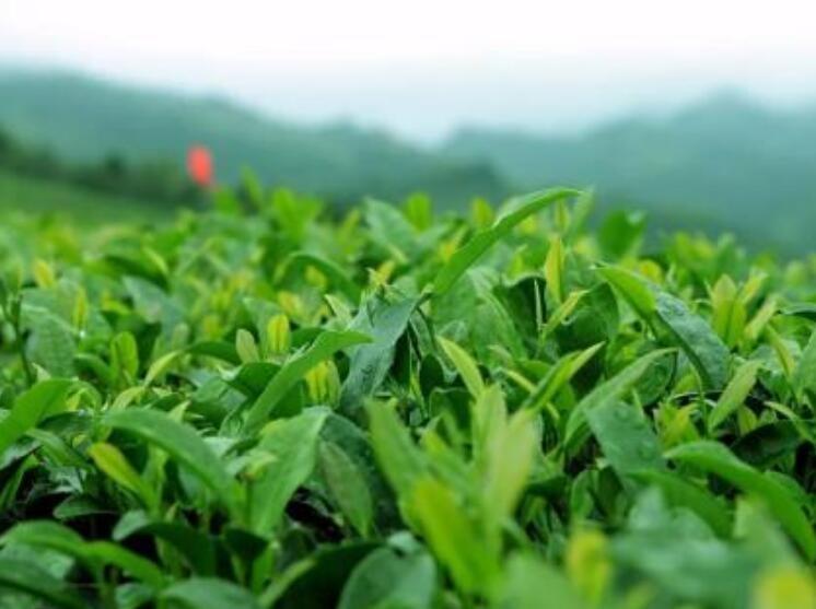 中国茶叶专卖店