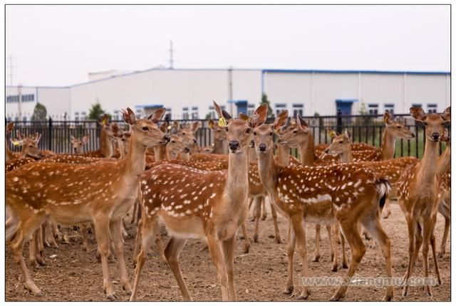 圣鹿源鹿产品加盟代理全国招商_5