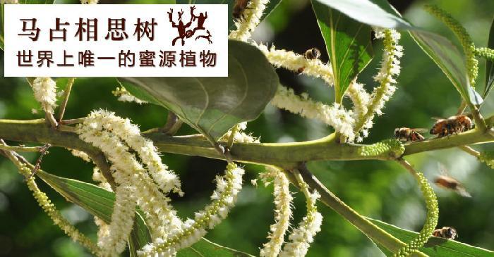 婆罗皇进口蜂产品加盟代理_2