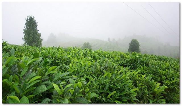 蒙顶皇茶加盟代理_蒙顶皇茶加盟条件费用_蒙顶皇茶加盟电话_1