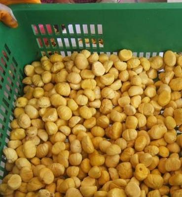 罗田县丰润绿色食品有限公司