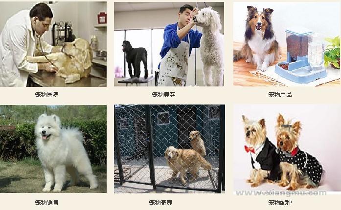 乖乖宠宠物连锁加盟机构全国招商——整站输出,一站服务_5