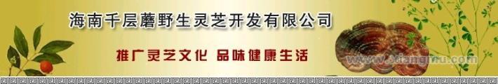 千层蘑野生灵芝专卖连锁店:远销国内外特色产业_1