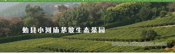 东裕茶叶加盟_2