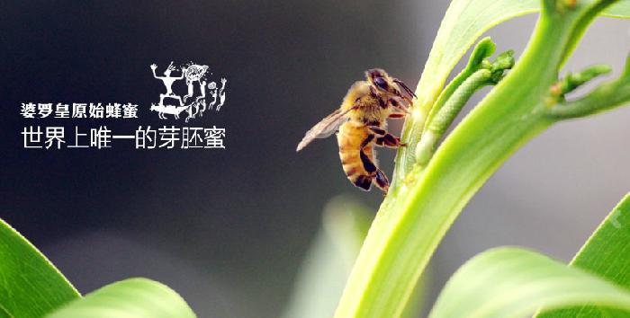 婆罗皇进口蜂产品加盟代理_1