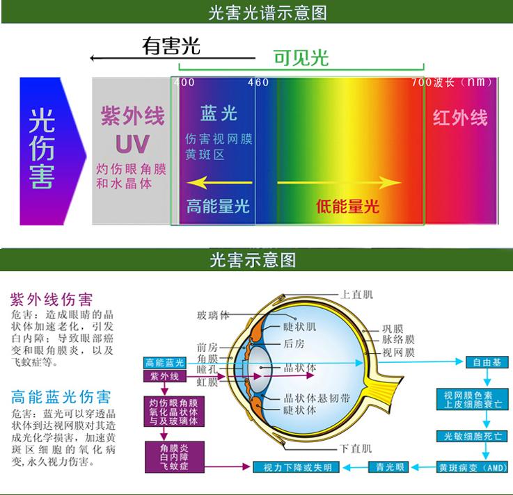 仙迪罗拉防光害辐射眼镜CD016_7