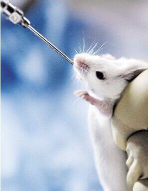 动物造模的实验模型有哪些?(图)_1