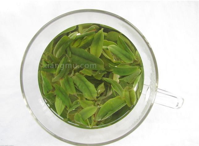 松萝有机茶业加盟_2