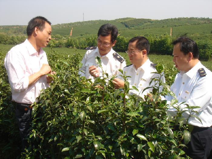 丛中笑茶业加盟_1