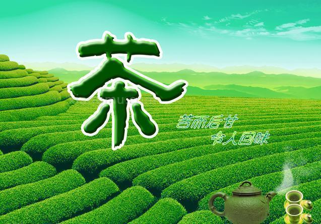 新美茶业加盟_2
